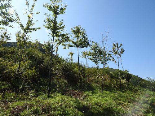 Nuestro Bosque En Valdeloyés, Santo Adriano, En 2018