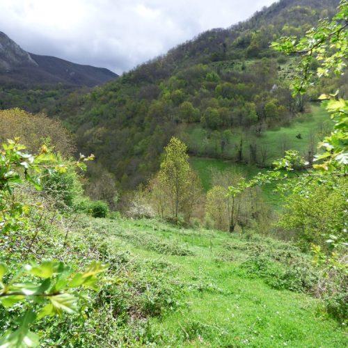 Nuestro Bosque En Teverga, En 2015
